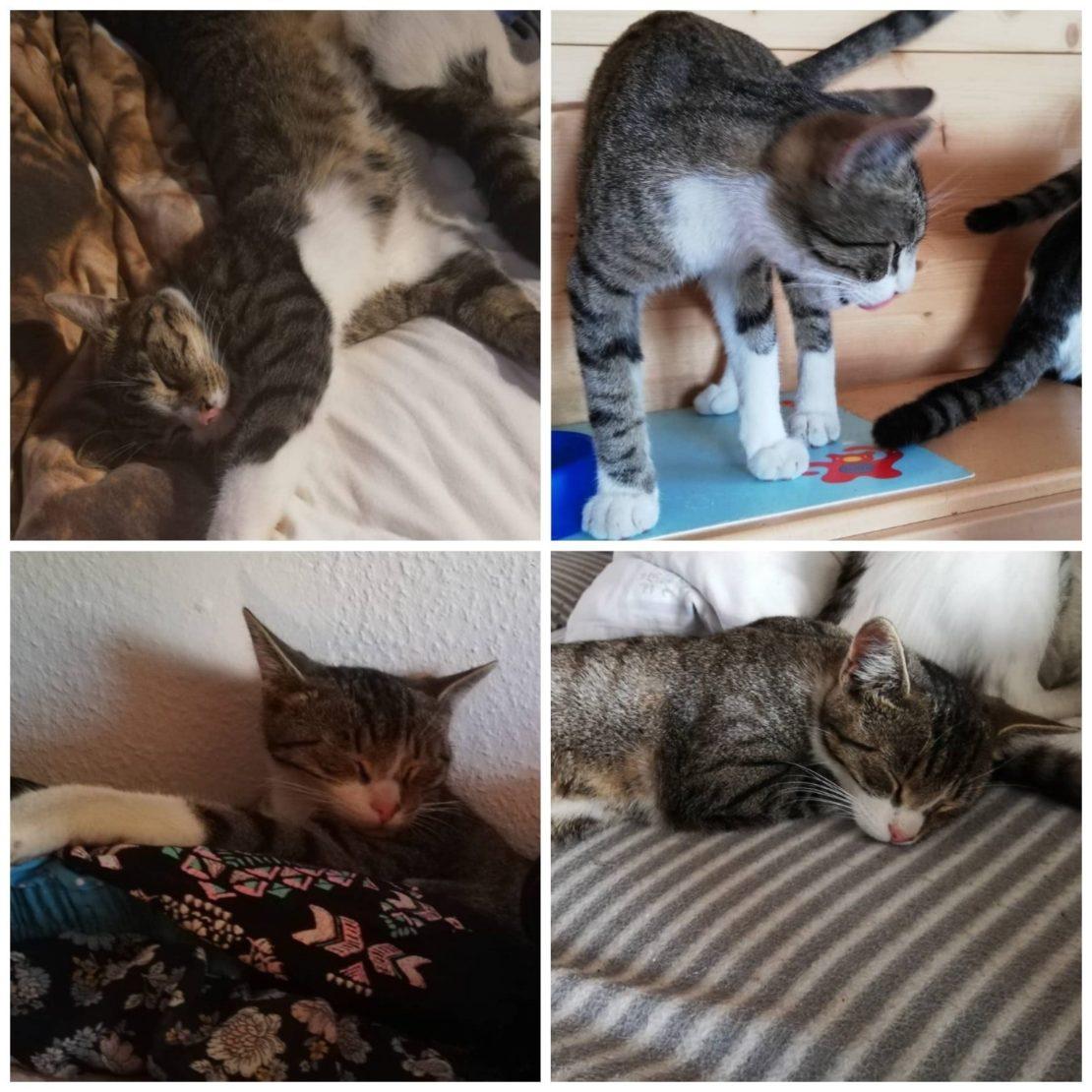 Katze vermisst in Marchtrenk