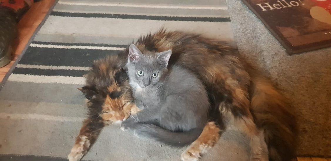 Katze in Steinerkirchen vermisst
