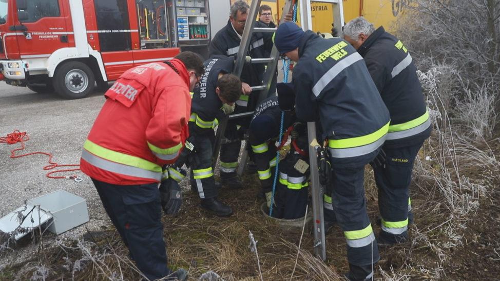 Feldhase in Wels-Vogelweide von Feuerwehr unverletzt aus Schacht gerettet