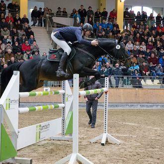 Hengstschau im Pferdezentrum Stadl-Paura