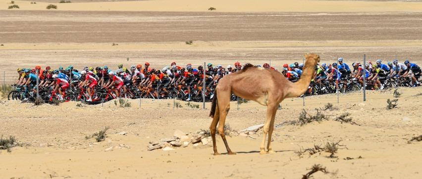 UAE Tour wegen Corna-Virus abgebrochen