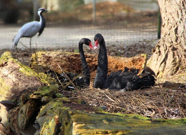 Frühling im Zoo Schimding