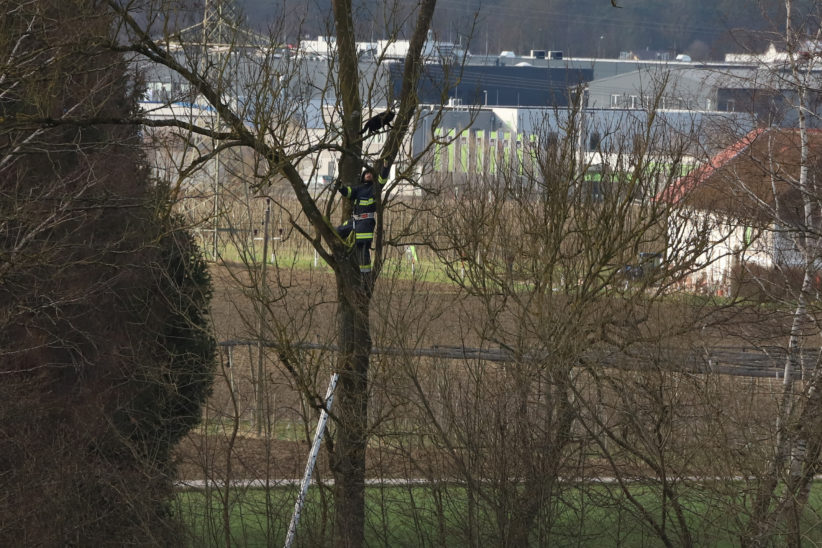 Katze lockte Einsatzkräfte bei Rettungsversuch von einem Baum in Holzhausen in luftige Höhe