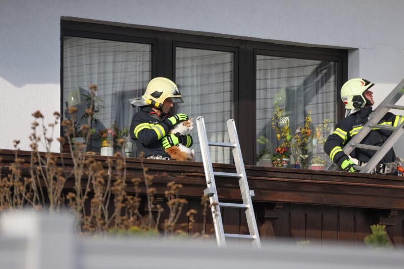 Kater Emilio nach viertägigem Ausflug in Thalheim bei Wels durch Feuerwehr von Hausdach gerettet