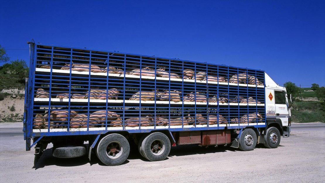 Tiertransport-Stopp gefordert