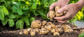 Tausende Mitarbeiter für Ernte, Agrarproduktion gesucht