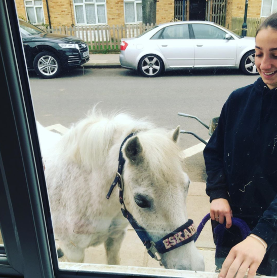 Ponys am Fenster sollen in London Isolierten helfen