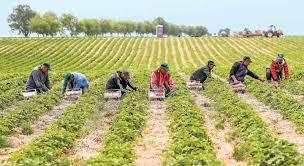 7.000 Personen wollen bei Ernte und Produktion mithelfen