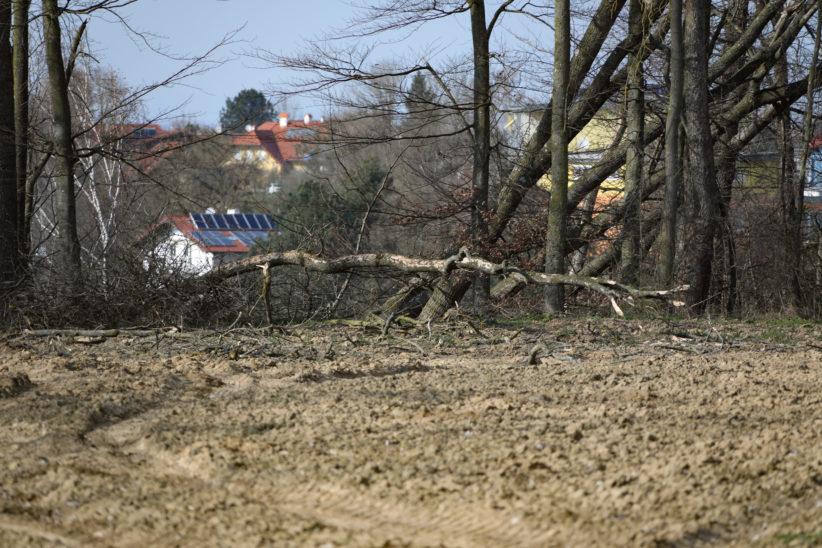 Personenrettung nach schwerem Forstunfall in Eberstalzell