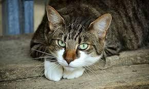 Katze positiv auf Covid-19 getestet