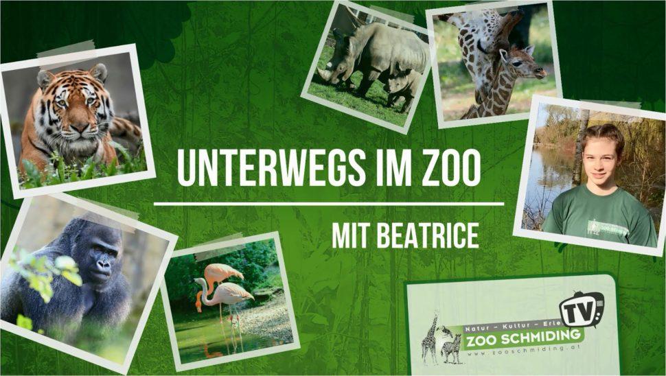 Videos von Tieren aus Zoo online