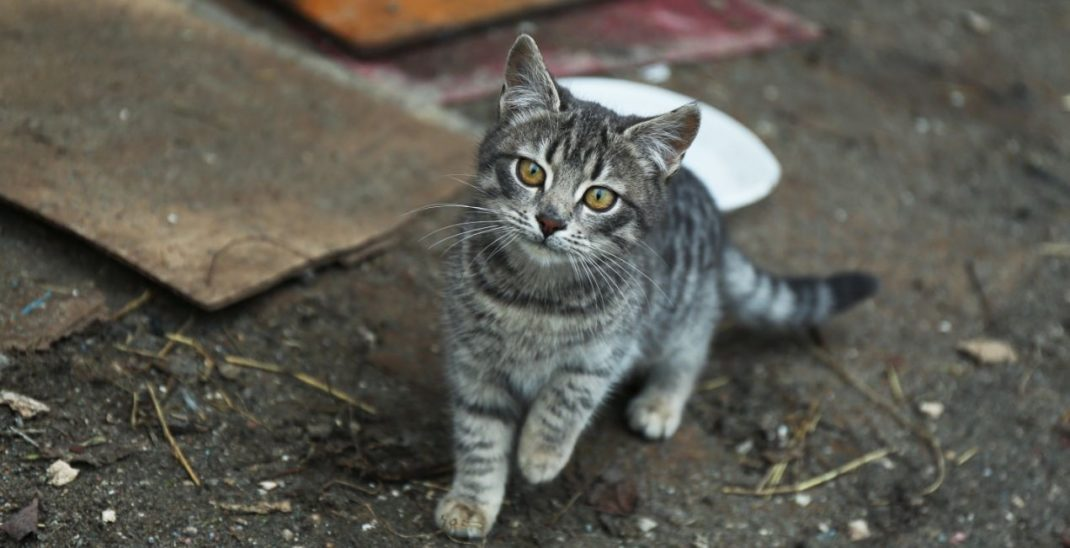Erneut Katze positiv auf Covid-19 getestet