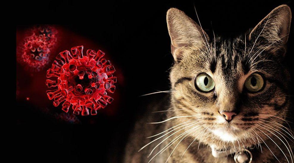 Katzen können sich mit Covid-19 infizieren, Hunde eher nicht