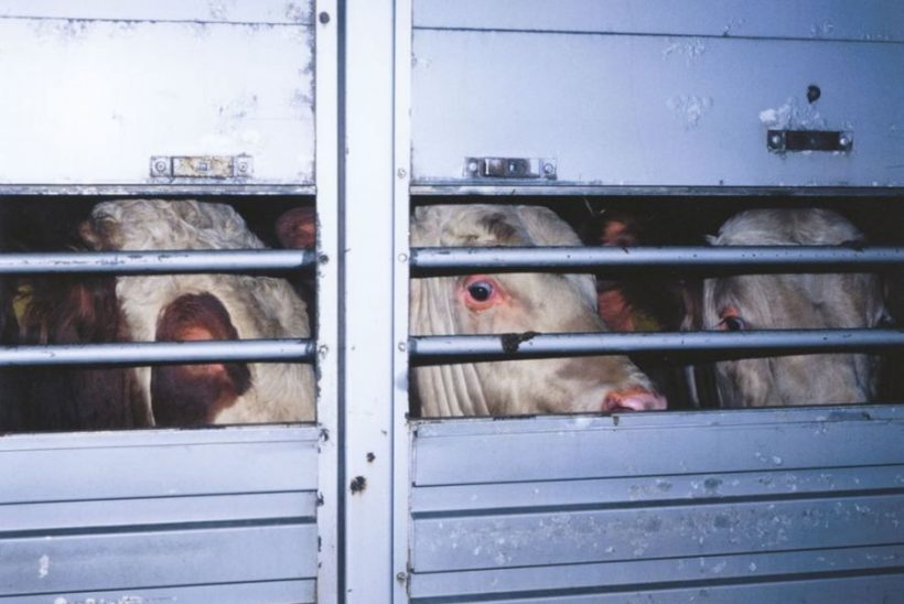Erlass für verschärfte Auflagen bei Tiertransporten