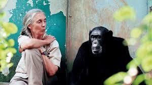"""Jane Goodall: """"Respektlosigkeit"""" gegenüber Natur verursachte Pandemie"""