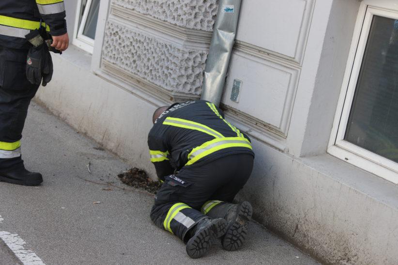 Taube in Wels-Innenstadt aus Abflussrohr einer Dachrinne befreit