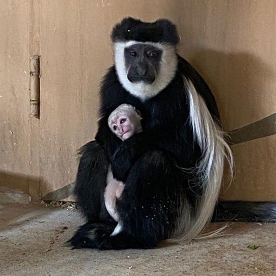 Nachwuchs im Tierpark Wels