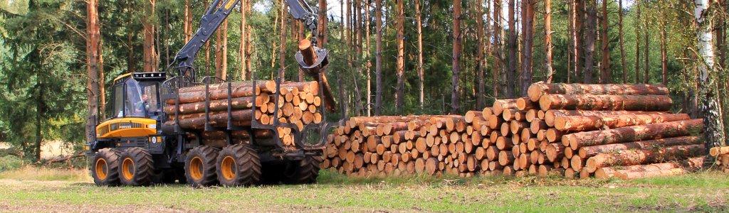 Coronakrise verschärft Klimawandel-Probleme in der Forstwirtschaft