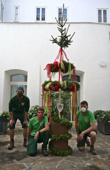 Maibaum der Stadt Wels