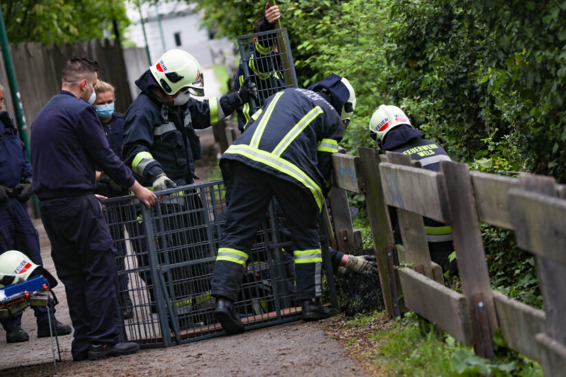 Feuerwehr rettet Reh in Wels-Innenstadt aus dem Bereich des Mühlbachs