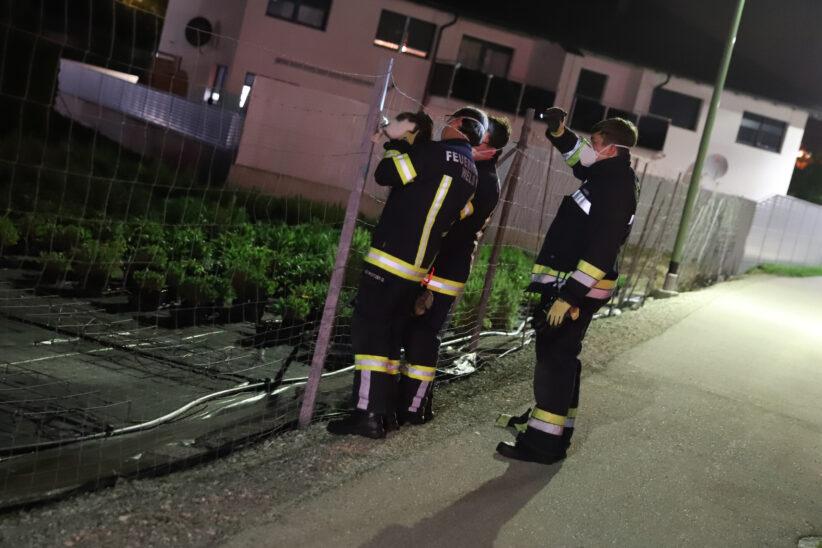 Feuerwehr befreit in Wels-Schafwiesen Katze aus einer Notlage