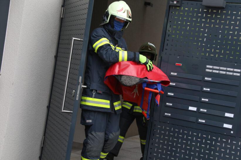 Feuerwehr beendet eigenmächtigen Ausflug eines Pfaus in einen Garten in Thalheim bei Wels