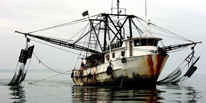 Greenpeace beklagt illegale Fischerei ohne Kontrollen