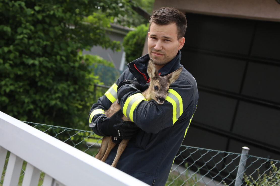 Rehkitz im Garten eines Hauses in Wels-Pernau von Einsatzkräften der Feuerwehr eingefangen