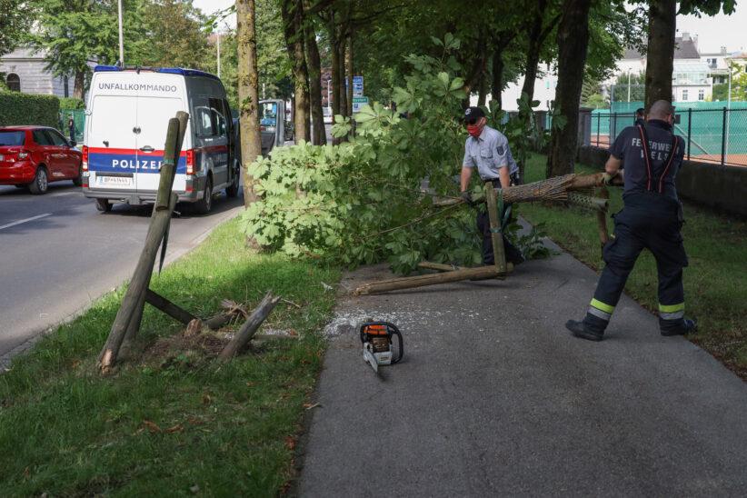 Auto gegen Baum: Unfall mit Fahrerflucht in Wels-Innenstadt