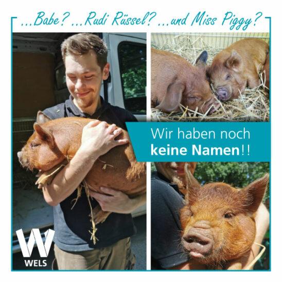 ....Babe? ....Rudi Rüssel...? ...und Miss Piggy? 🤔