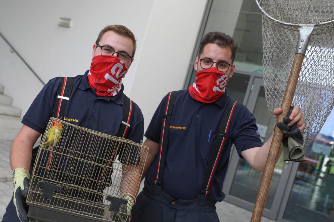 Kanarienvogel im Klassenzimmer: Feuerwehr in einer Schule in Wels-Vogelweide auf Vogelfang