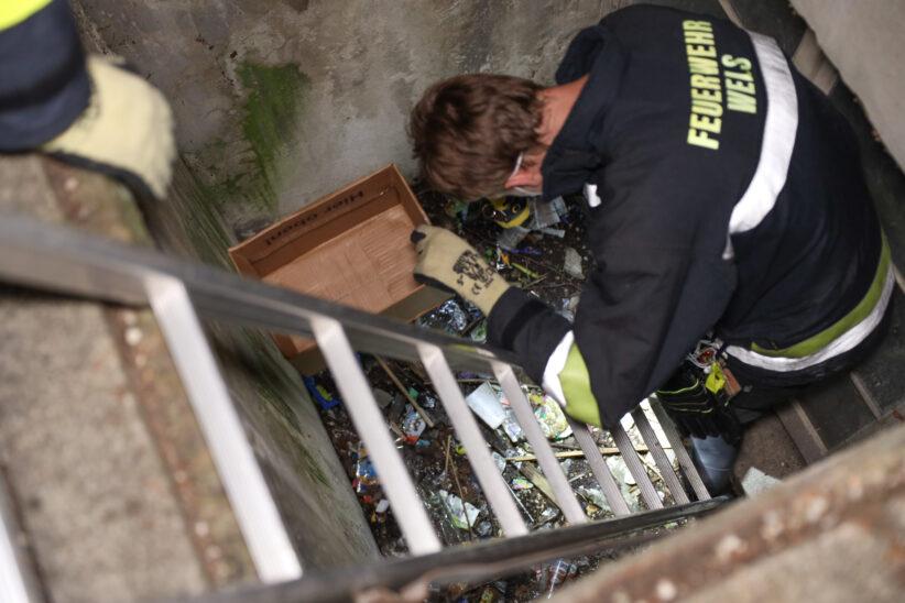 Feuerwehr rettet Kröte: Jugendliche entdecken Kleintier in vermülltem Lichtschacht in Wels-Vogelweide