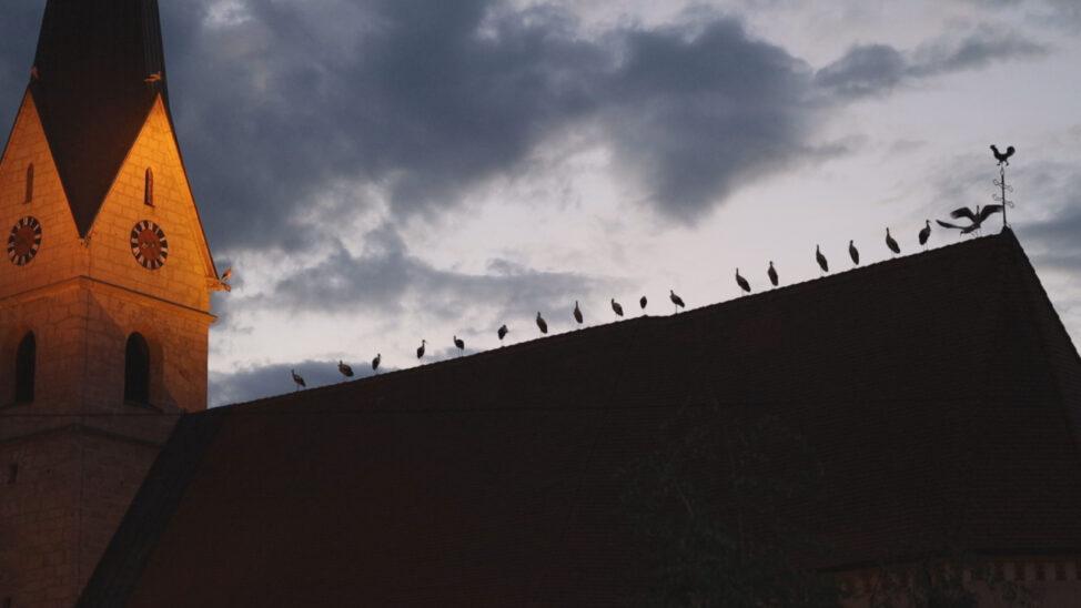 Imposantes Naturschauspiel: Störche auf Kirchendach und Turmdrehkran in Weißkirchen an der Traun