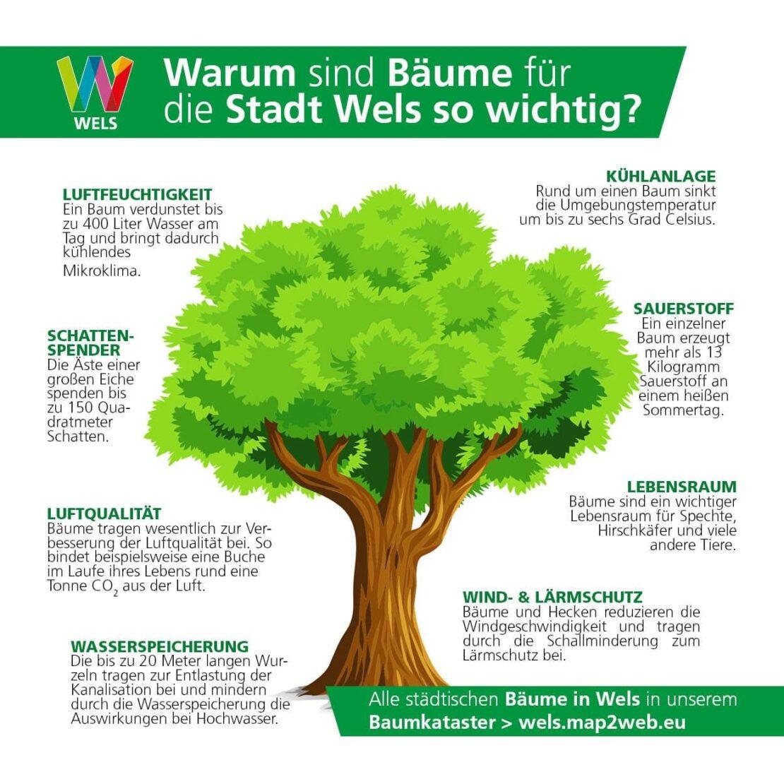 Baumstadt Wels