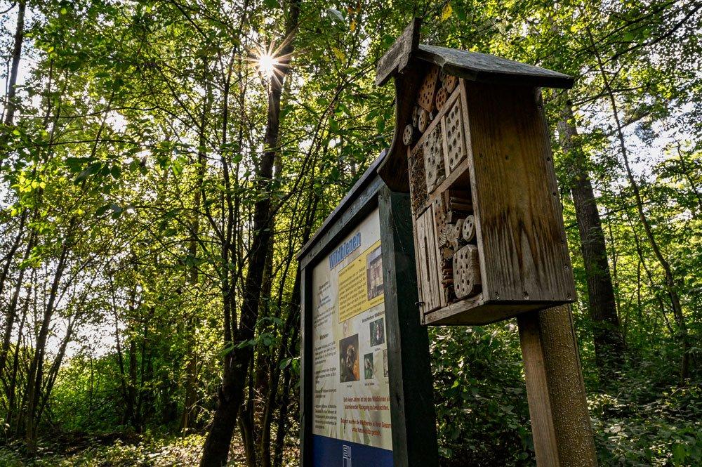 Erfahre Interessantes beim Bienenerlebnisweg 🍯🌺