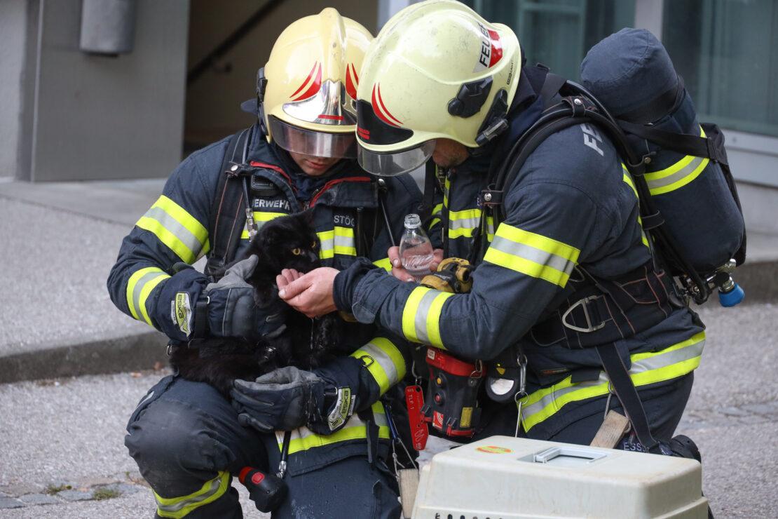 Bewohnerin und zwei Katzen in Wels-Neustadt durch Feuerwehr aus Brandwohnung gerettet