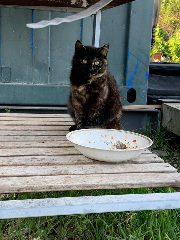 Vermisste Katze in Wels