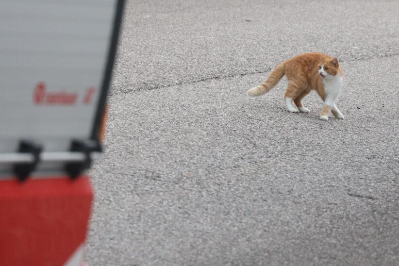Katze in Steinhaus durch Einsatzkräfte der Feuerwehr erfolgreich vom Baum gerettet
