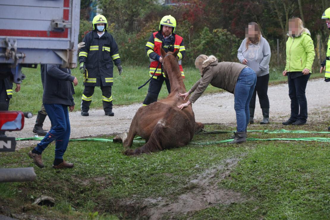 Pferd in Pichl bei Wels durch Einsatzkräfte der Feuerwehr aus Straßengraben gerettet