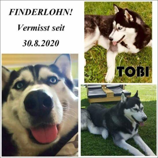 Finderlohn für vermissten Tobi