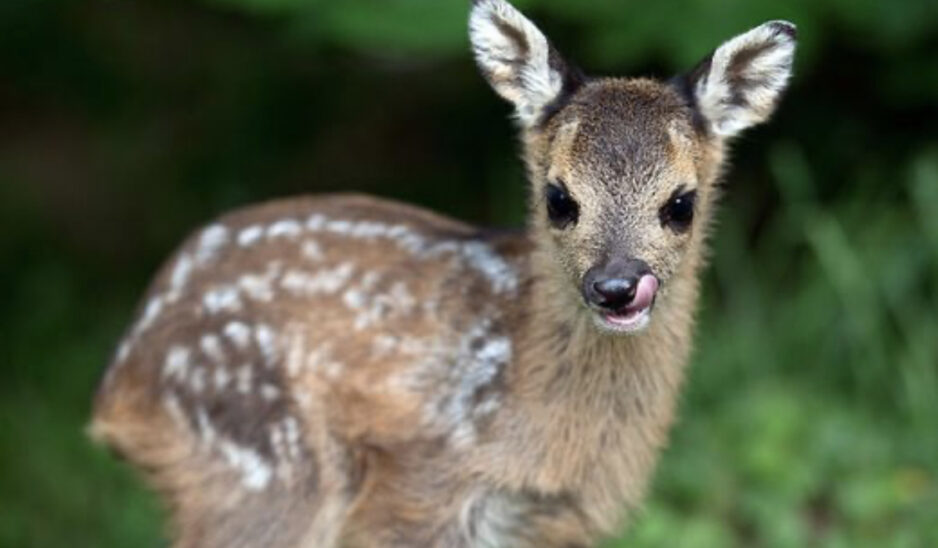 Umweltministerin plant Maßnahmenpaket gegen Wildtierkriminalität