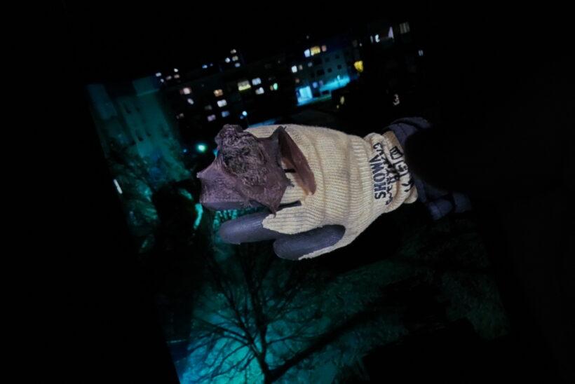 Verirrte Fledermaus durch Feuerwehr aus Wohnung in Wels-Neustadt geholt