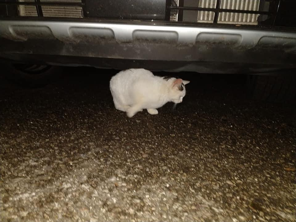 Katze entlaufen