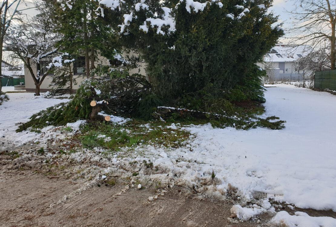 "Strauchschnitt statt ""Baum droht umzustürzen"" in Wels-Vogelweide"