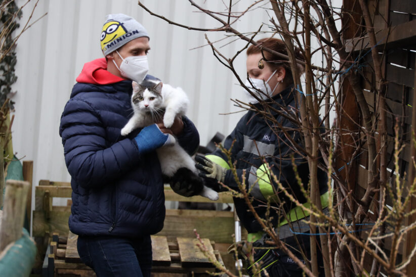 """Tierrettung: Kater """"Mogli"""" verirrte sich in Wels-Vogelweide ins Materiallager eines Unternehmens"""
