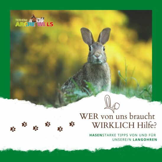 Tierheim Arche Wels