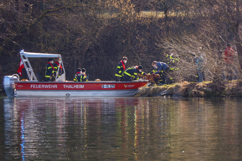 Hund in Thalheim bei Wels mit Feuerwehrboot aus der Traun gerettet