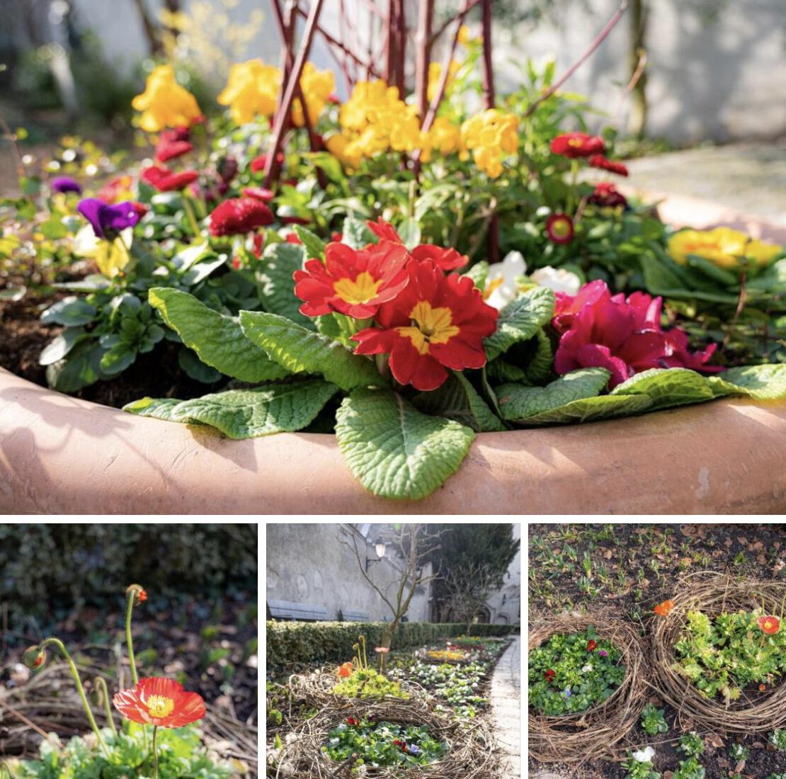 Frühlingsblumen in Wels