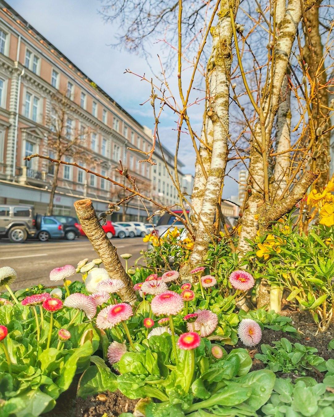 Frühling in Wels