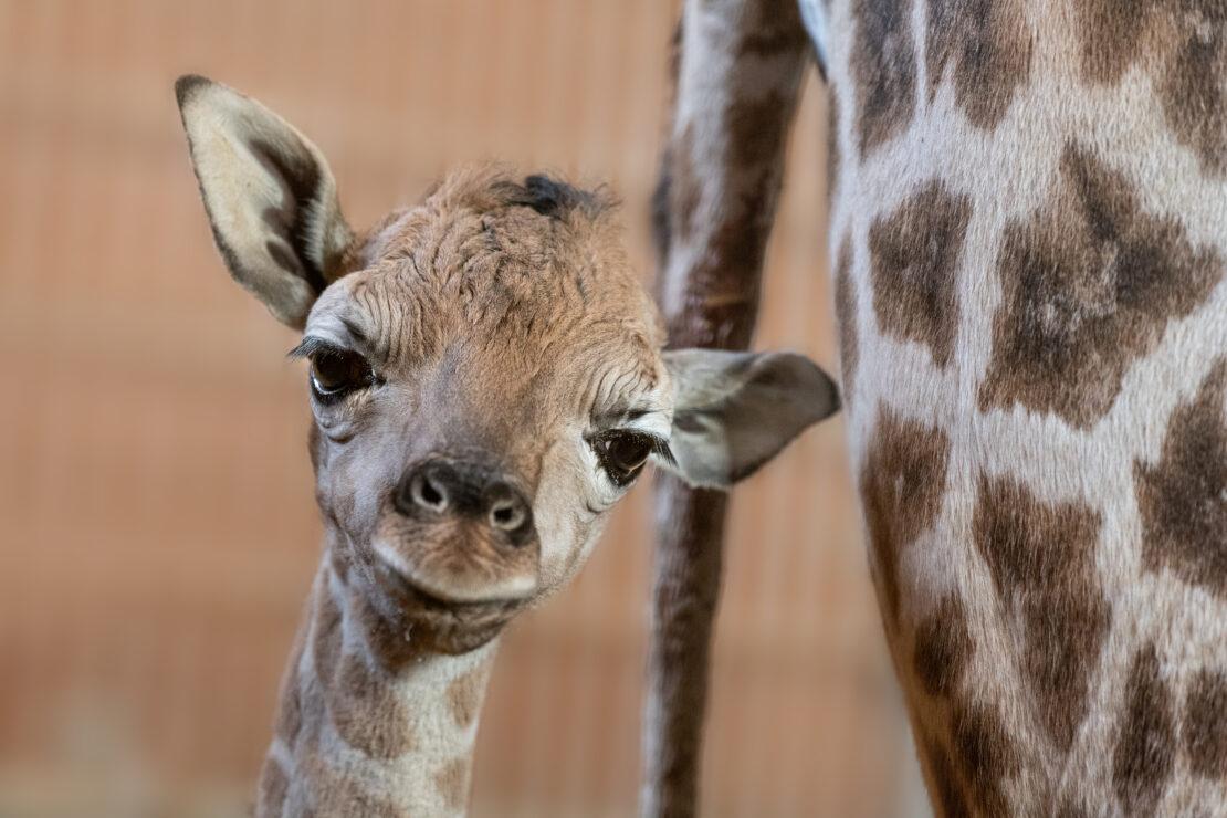 Frühlingsboten – Tierbabys im Zoo Schmiding